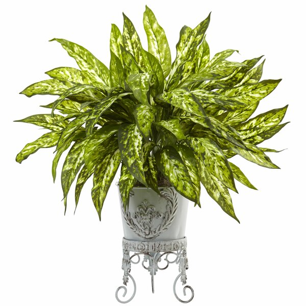 Aglaonema Plant in Planter by Nearly Natural