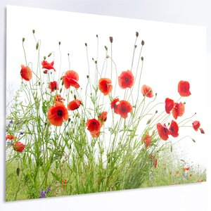 'Poppies on White Background' Photographic Print on Metal by Design Art