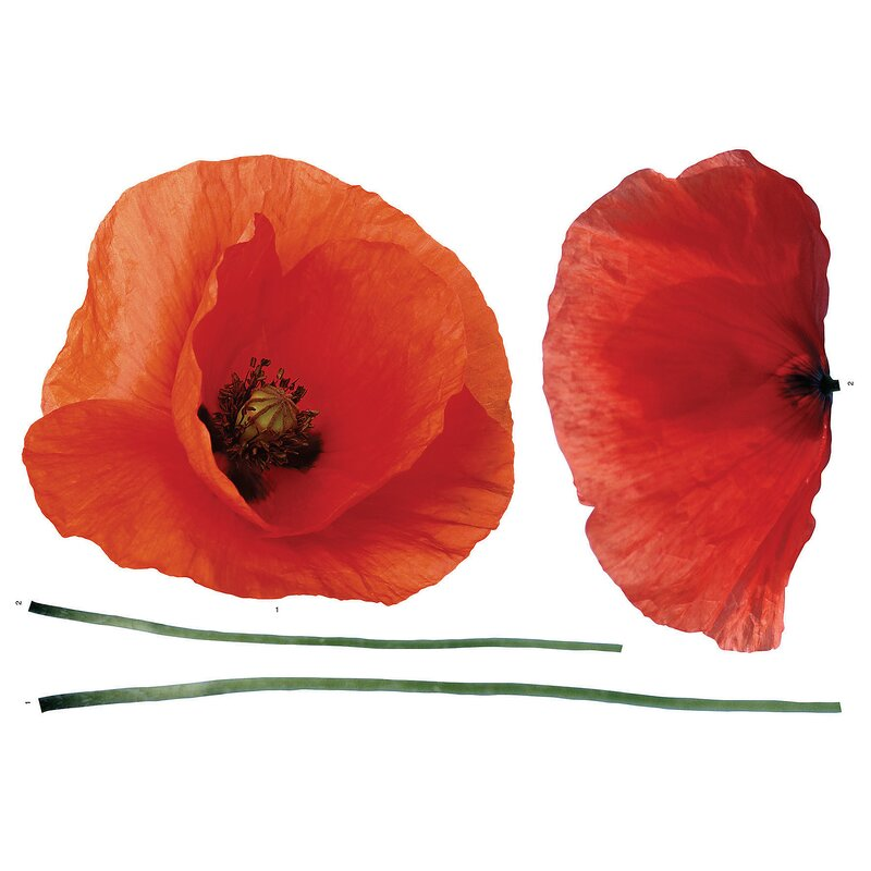Brewster Home Fashions Euro Poppies Wall Decal & Reviews
