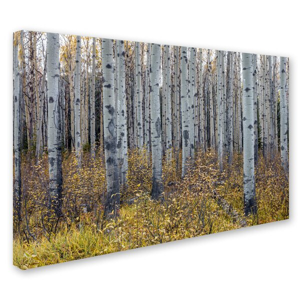Aspen Trees in Autumn by Pierre Leclerc Photographic Print on Wrapped Canvas by Trademark Fine Art