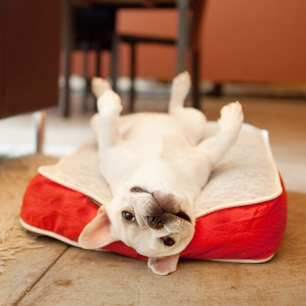 Safari Serengeti Rectangular Dog Pillow by P.L.A.Y.