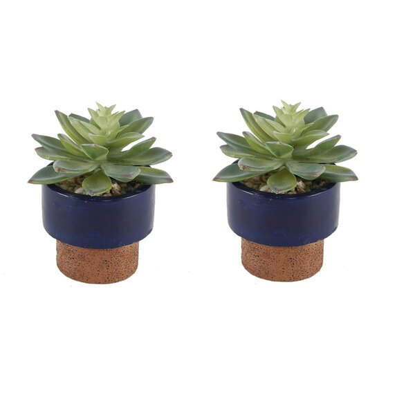 Navy Desktop Succulent Plant in Pot (Set of 2) by