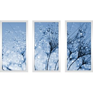 'Dewy Dandelion Flower Close Up Full' 3 Piece Framed Graphic Art Set by Picture Perfect International