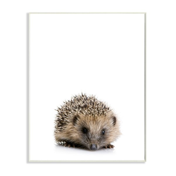 Baby Hedgehog Studio Photo Wall Plaque by Stupell Industries