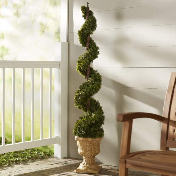 Cedar Spiral Tree in Urn by Astoria Grand