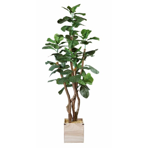 Fig Wooden Floor Foliage Tree in Planter by Breakwater Bay