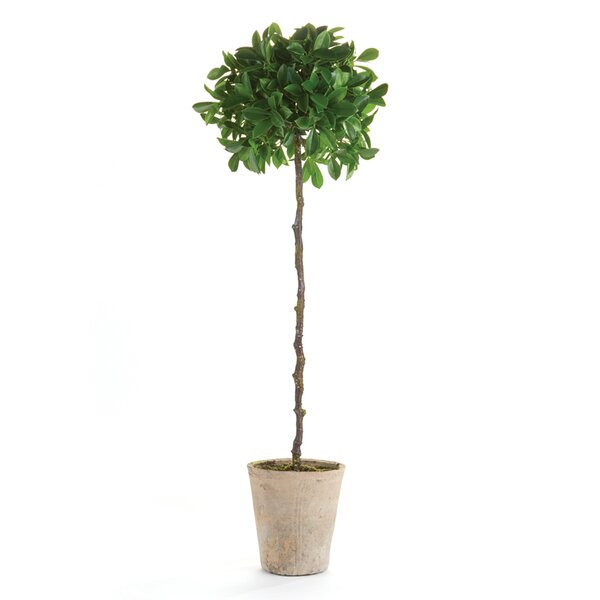 Topiary Tree in Pot by Laurel Foundry Modern Farmhouse