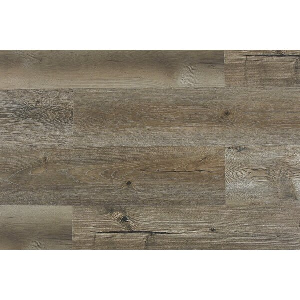 Aditya  8 x 71 x 12mm Laminate Flooring in Luccio by Serradon