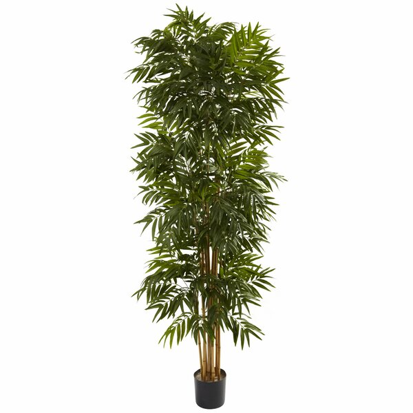 Palm Tree in Pot by Beachcrest Home