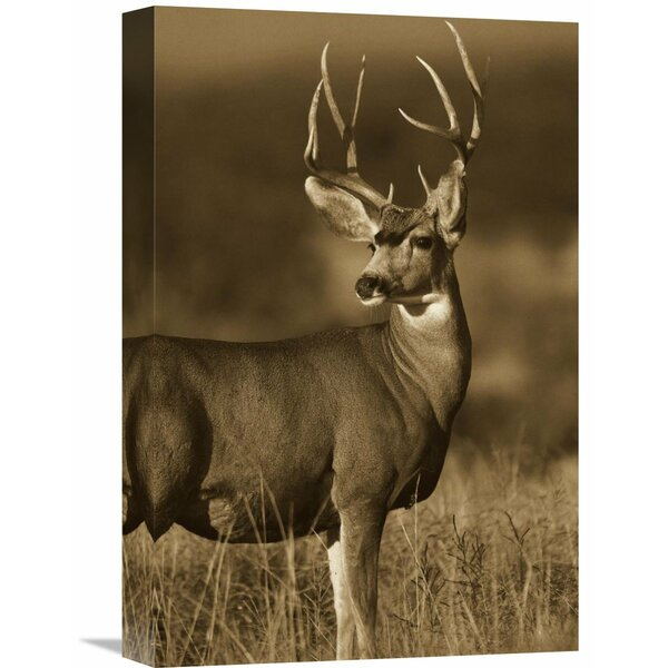 Nature Photographs Mule Deer Male by Global Gallery