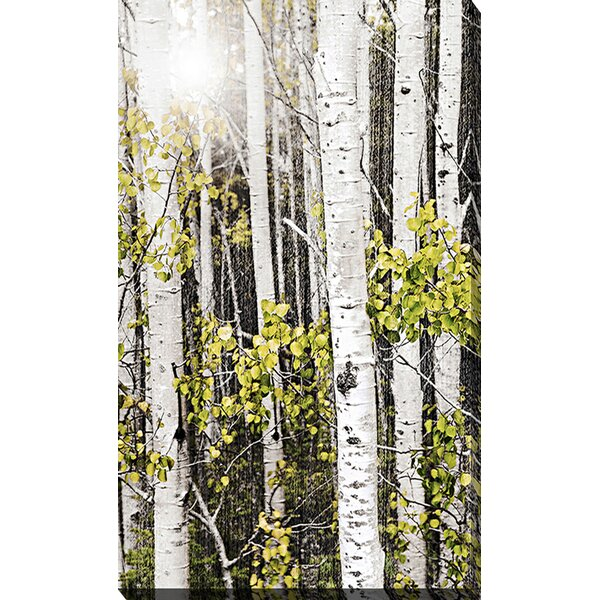 Aspens 3 by Elena Elisseeva Photographic Print on Wrapped Canvas by Picture Perfect International