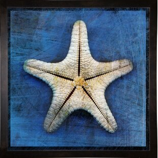 'Armored Starfish Underside' Graphic Art Print by Highland Dunes