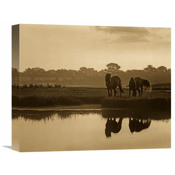 Nature Photographs Wild Horse Pair Grazing at Assateague Island National Seashore, Maryland by Tim Fitzharris Photographic Print on Wrapped Canvas by Global Gallery