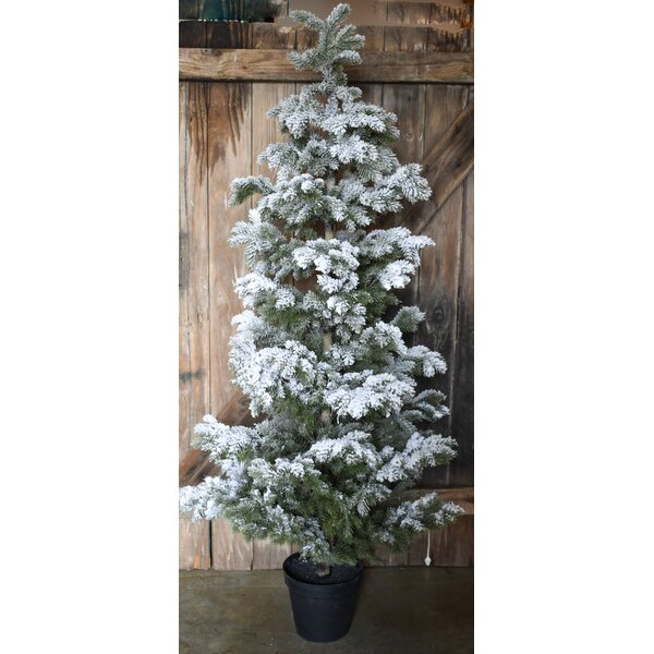 Snow Flocked Pine LG 67 Green Christmas Tree by Darby Home Co