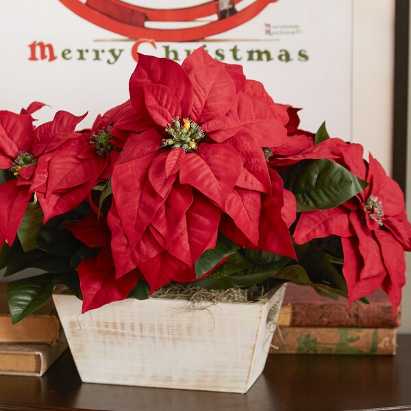Poinsettia with White Wash Planter Silk Arrangement by Nearly Natural