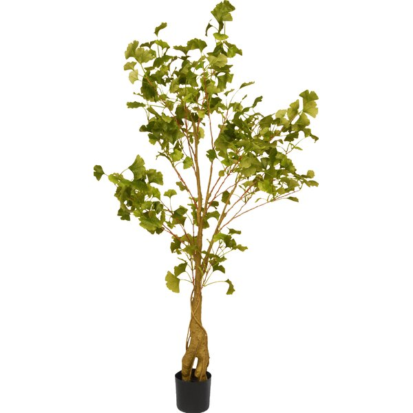 Ginkgo Tree in Pot by National Tree Co.