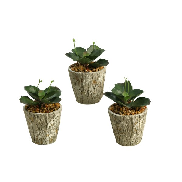 Wild Succulent Plant in Planter by Union Rustic