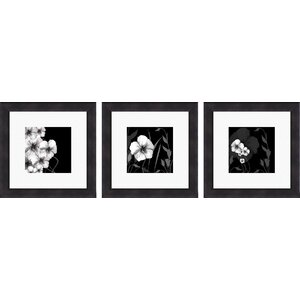 Ebony and Ivory 3 Piece Framed Graphic Art Set by PTM Images