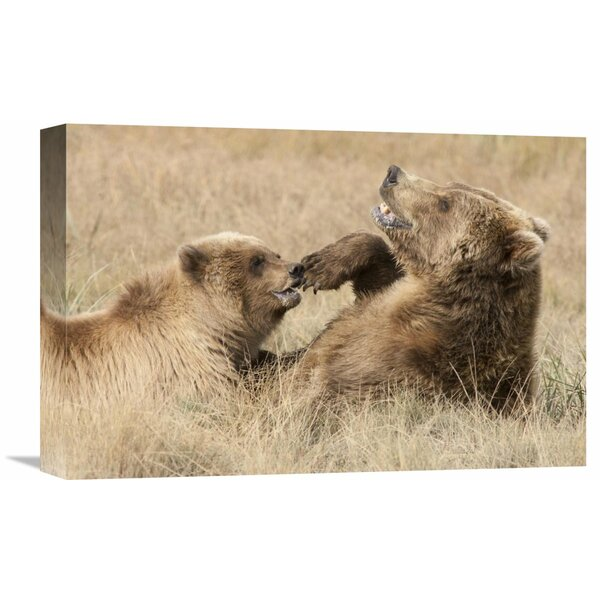 Nature Photographs Grizzly Bear Mother and Cub Playing, Katmai National Park, Alaska by Matthias Breiter Photographic Print on Wrapped Canvas by Global Gallery