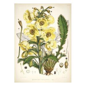 Vintage Botanical VI by Julia Kearney Graphic Art Print by Evive Designs