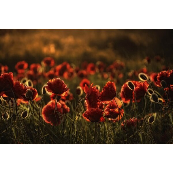 Red flowers Photographic Print on Wrapped Canvas by 3 Panel Photo