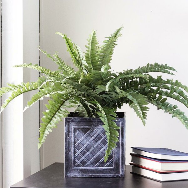 Artificial Boston Fern in Square Pot by Ivy Bronx