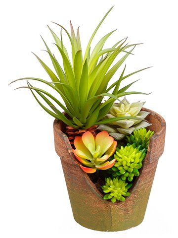 Succulent Plant in Pot by Bungalow Rose