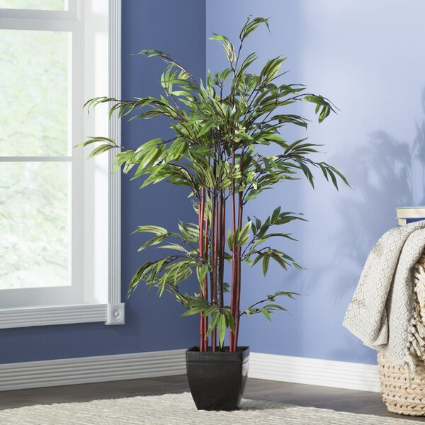 Floor Bamboo Tree in Planter by Beachcrest Home