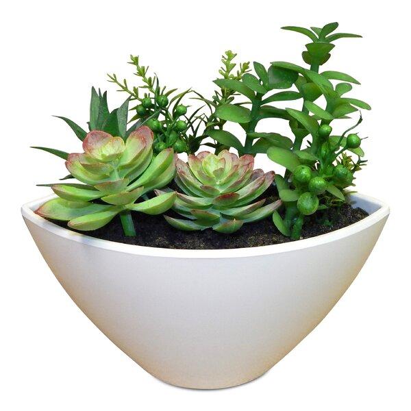 Fairy Garden Desktop Succulent Plant in Pot by Wrought Studio