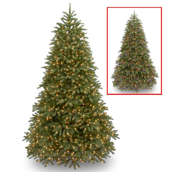 Jersey Fraser Feel Real Medium  Green Fir Artificial Christmas Tree with 1500 Lights with Stand by Winston Porter