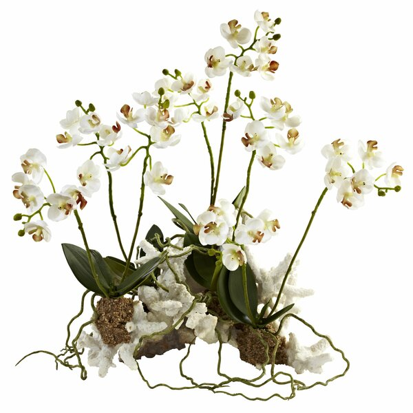 Mini Phalaenopsis Orchids Floral Arrangement by Nearly Natural