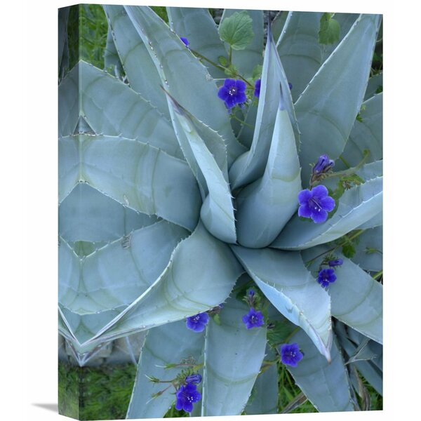 Nature Photographs Bluebell and Agave , North America by Tim Fitzharris Photographic Print on Wrapped Canvas by Global Gallery