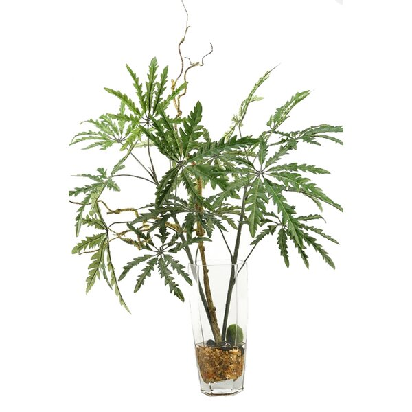 Finger Aralia Branches Floor Plant in Decorative Vase by Bay Isle Home