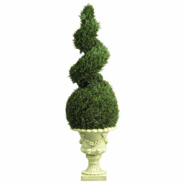 Cedar Spiral Topiary Floor Plant in Urn by Astoria Grand