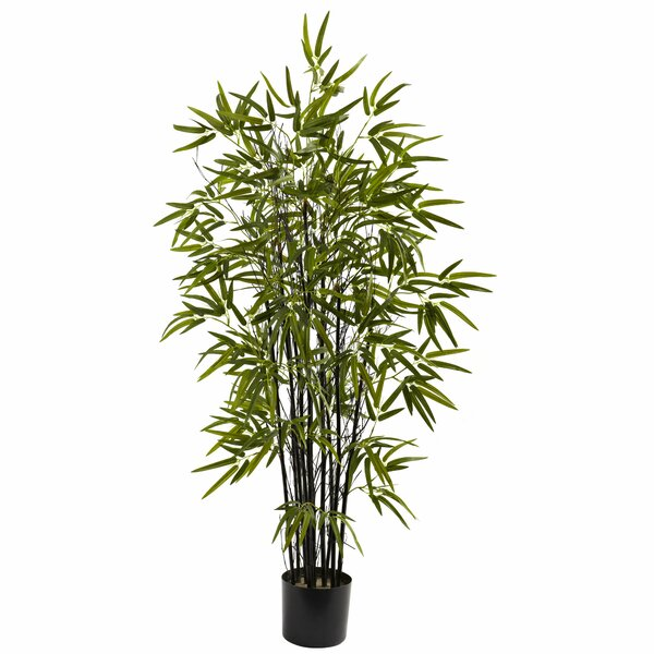 Black Bamboo Tree in Pot by Bungalow Rose