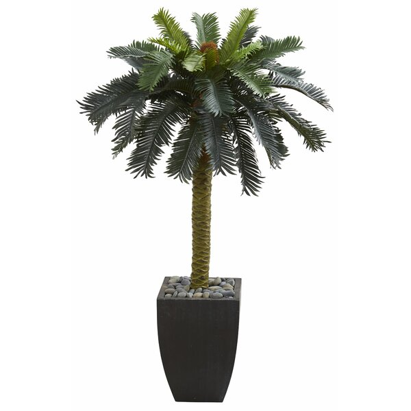 Sago Floor Palm Tree in Planter by Bay Isle Home