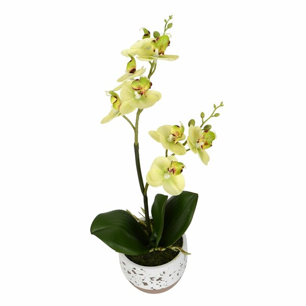 Artificial Mini Phalaenopsis Floral Arrangement in Pot by Bloomsbury Market