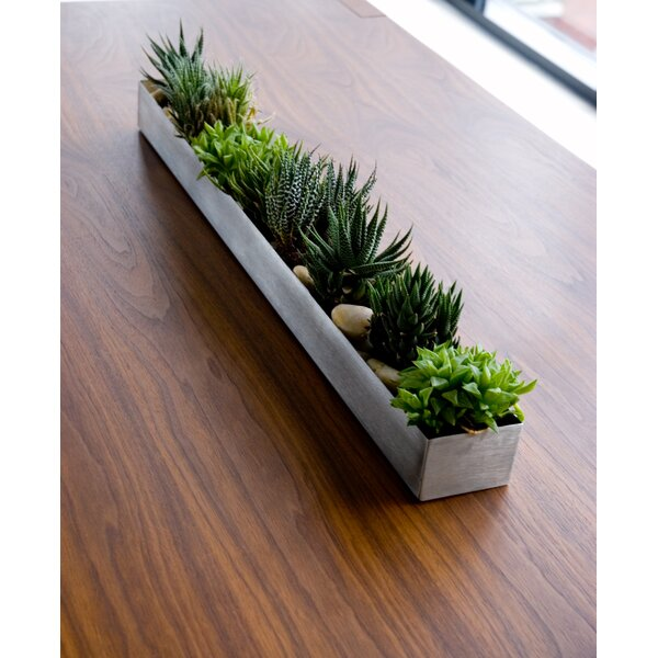 Stainless Steel Planter Box by Gus* Modern