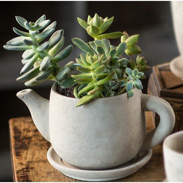 Sana Tea Concrete Pot Planter by Gracie Oaks