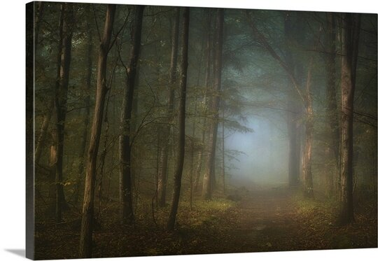 Forest Pathway by Norbert Maier Photographic Print on Canvas by Canvas On Demand