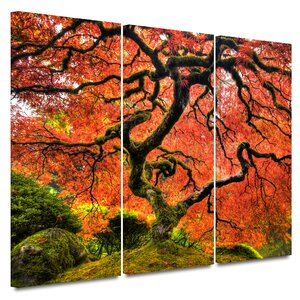 'Japanese Maple Tree' by John Black 3 Piece Photographic Print on Canvas Set by Darby Home Co