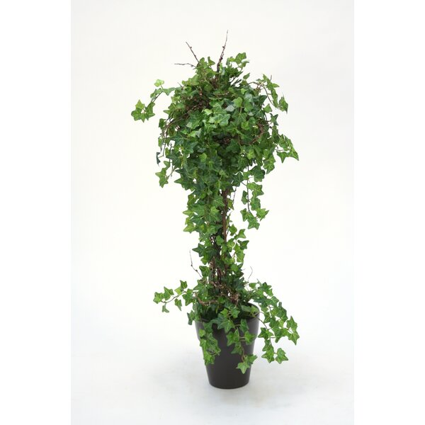 Mini Floor Ivy Topiary in French Pot by Charlton Home