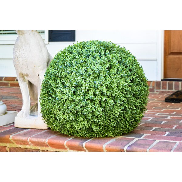 Floor Boxwood Topiary by Charlton Home