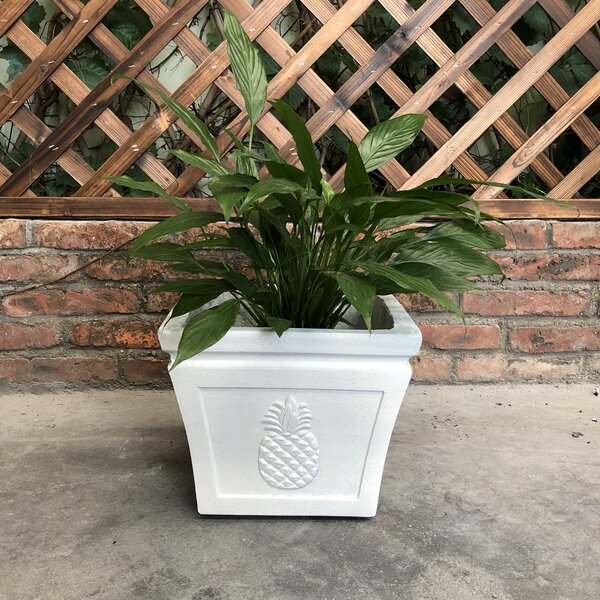 Caenas Square Pineapple Pot Planter by Bay Isle Home