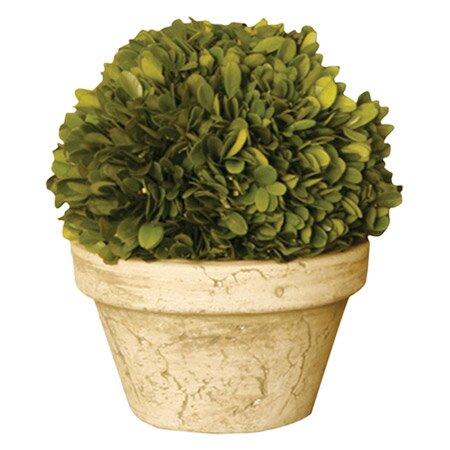 napa home u0026 garden preserved potted boxwood topiary u0026 reviews wayfair