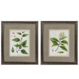 'East Indian Plants' 2 Piece Framed Graphic Art Set by Propac Images