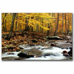 Autumn's Fire by CATeyes Framed Photographic Print on Wrapped Canvas by Trademark Fine Art