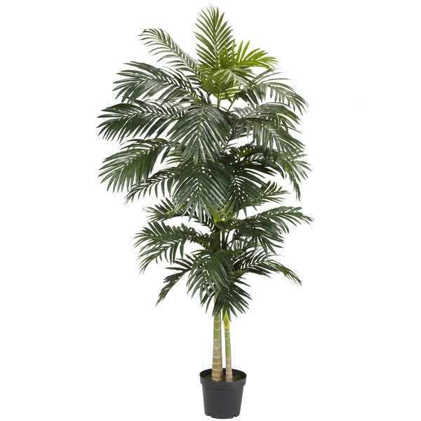 Cane Palm Tree in Pot by Bay Isle Home