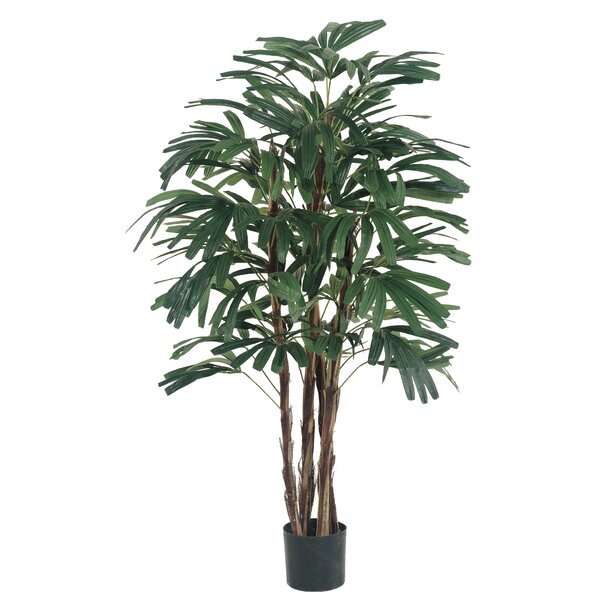 Rhapis Tree in Pot by Bayou Breeze