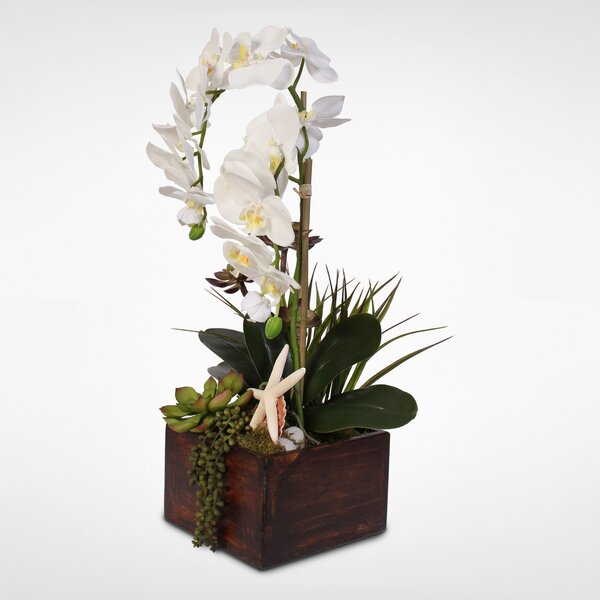 Phalaenopsis Orchid and Artificial Succulents Floral Arrangement in Planter by Rosecliff Heights